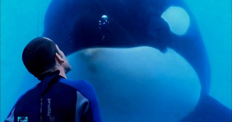 Top 25 Films of 2013 - Blackfish